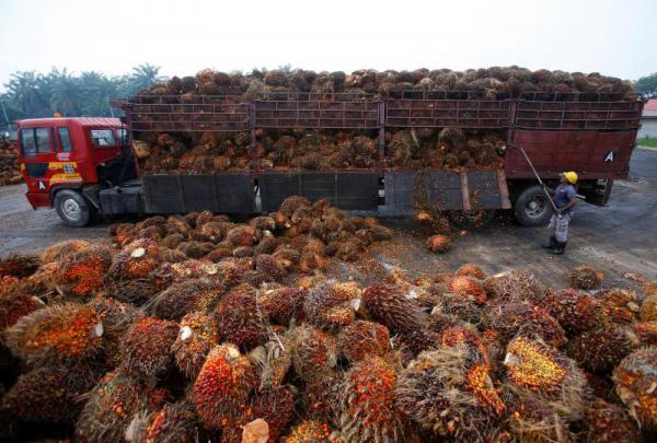 Palmöl Rohöl und raffiniertes Palmkernöl, Öl für Biodiesel