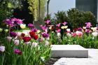 Moderne Gartenkonzepte - Gartengestaltung passend zur Architektur