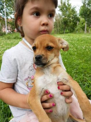Chihuahua mischlings welpen sucht neues Zuhause