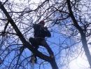 Baumschnitt von Secheli Gartengestaltung Wien