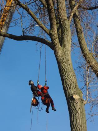 Ihr Fachbetrieb für Baumpflege und Baumfällung