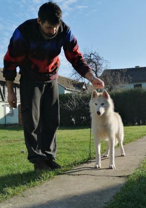 Siberian Husky Rüde aus der Zucht