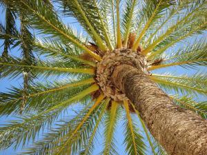 Die schönsten Ferien unter der Sonne - Costa Blanca fit und gesund!