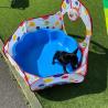 Reinrassige MINI Französische BulldoggenBabys suchen  ein liebevolles Zuhaus