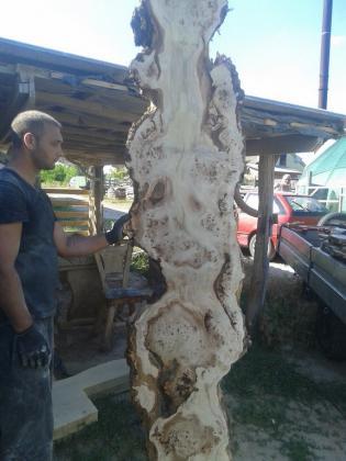 Getrocknetes Schnittholz aus Topolya - Pappelholz bestellbar!
